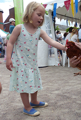 Meeting chickens